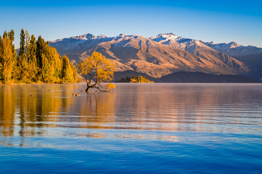 Autumn Colours Wanaka Tree