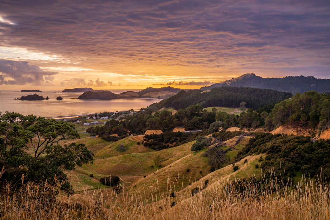Coromandel Golden Morning Glow