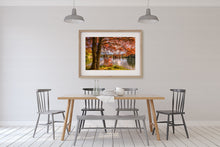 Load image into Gallery viewer, Autumn Tree McLaren Falls