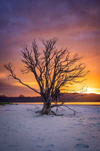 Coromandel Lone Tree Sunset