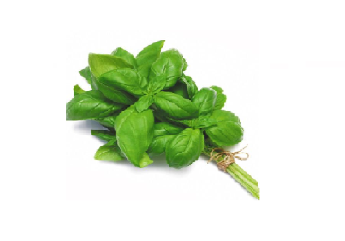 Basil Leaves (Price per 100 gms) - FAST AND FRESH  GLOBAL LLP