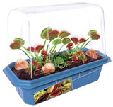 Frightening Fly Trap Mini World Terrarium