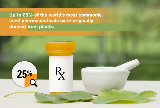 Up To 25% Of The World's Most Commonly Used Pharmaceuticals Were Originally Derived From Plants