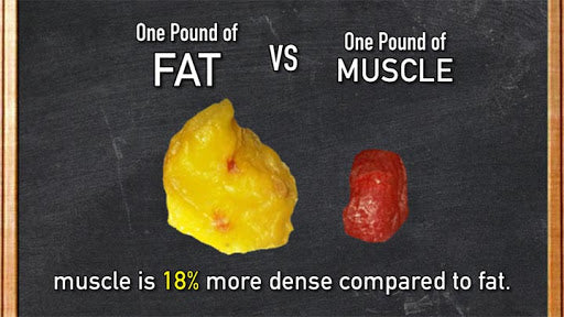 Which Weighs More- A Pound Of Fat Or A Pound Of Muscle?