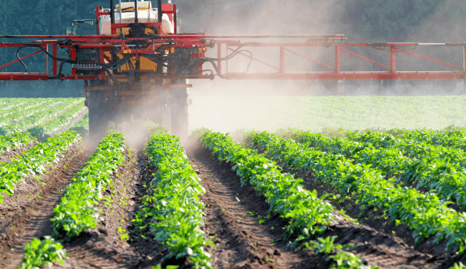 THE DIRTY DOZEN - ARE YOU UNKNOWINGLY EATING PESTICIDES?