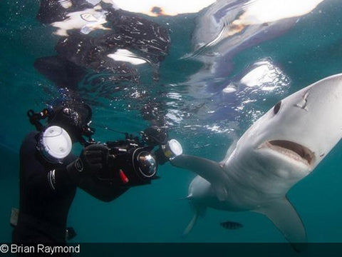 Making Waves in Shark Research & Photography