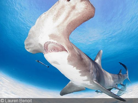 Dive Photo Guide Photographer of the Week