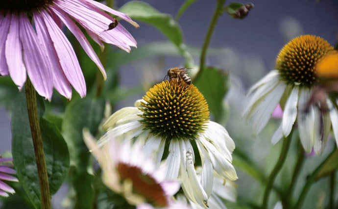 5 easy garden tips to help save bees