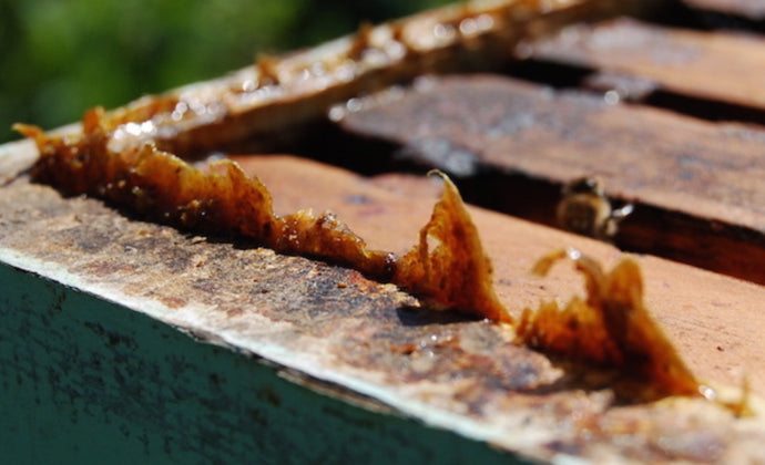 Propolis can help