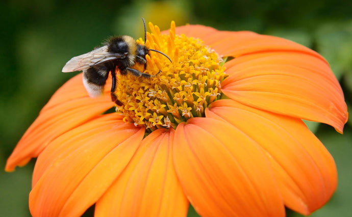 What would happen if bees became extinct?