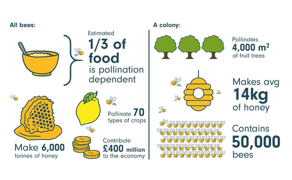 Bees pollinate one third of food we eat