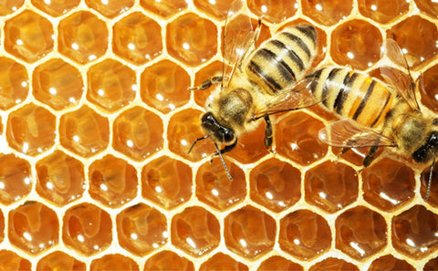 How is honey made by bees?