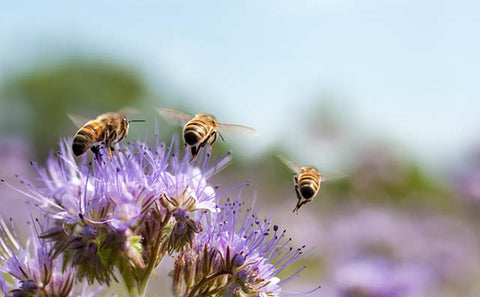 Why are bees crucial for the environment