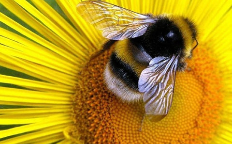 Bees pollinate crops which is important to the environment