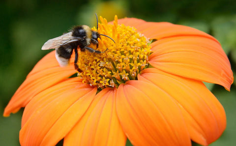10 things that need bees