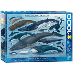 Whales & Dolphins - 1000pc