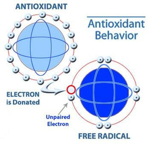 Antioxidants & Pro-oxidants: Finding the Balance