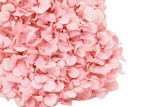Preserved Hydrangea | Pastel Light Pink