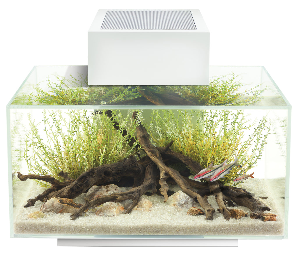Fluval Edge Aquarium Kit