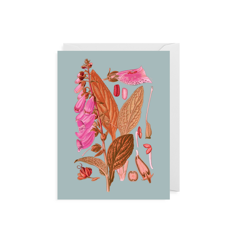 Kew Botanical Gardens | Lady's Glove Mini Cards