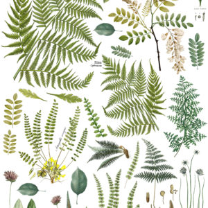 "IOD - Iron Orchid Designs - Decor Transfer - Fronds Botanical - 24"" x 33"""