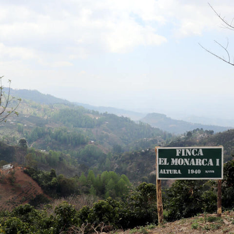 View of El Monarca farm