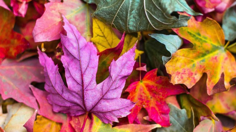 Cleaning up leaves - Wireless Outdoor Security Camera for Fall