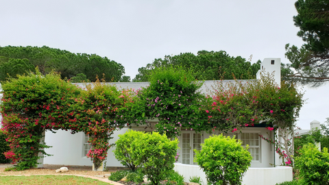 Keeping your hedges clear | Toucan Smart Home
