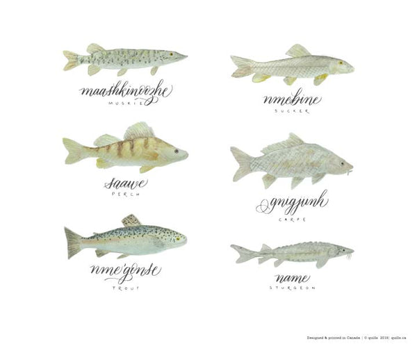 Ontario fish - Ojibwe names