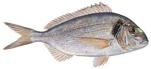 Silver Bream / Durarde / Gilt Head Bream