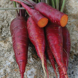 Dragon Carrot from Seed Savers Exchange