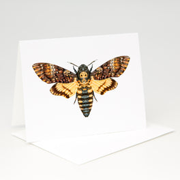 Death's-head Hawk Moth Card