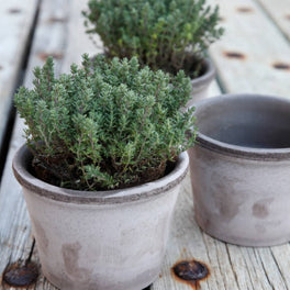 Bergs Potter Parade Pot Grey