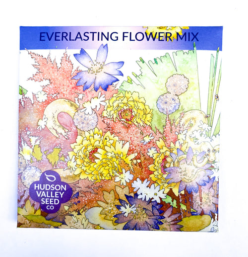 Everlasting Flower Mix