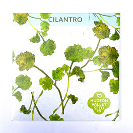 Cilantro/Coriander from Hudson Valley Seed Library