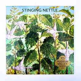 Stinging Nettle from Hudson Valley Seed Library