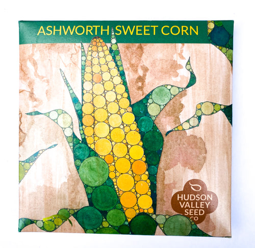 Ashworth Sweet Corn from Hudson Valley Seed Company