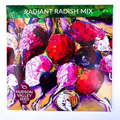 Radiant Radish Mix from Hudson Valley Seed Library