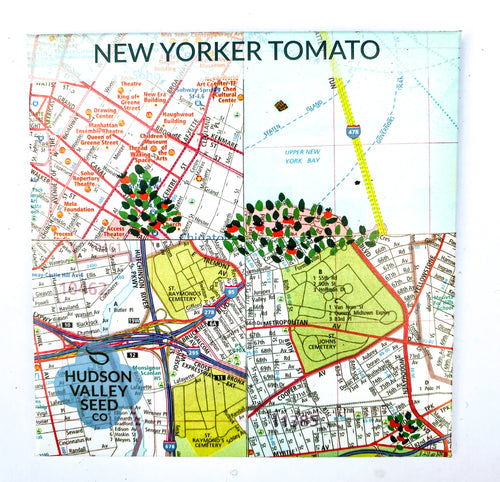 New Yorker Tomato from Hudson Valley Seed Library