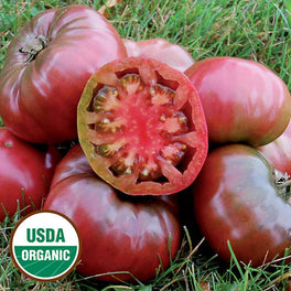 'Cherokee Purple' Heirloom Tomato Transplant