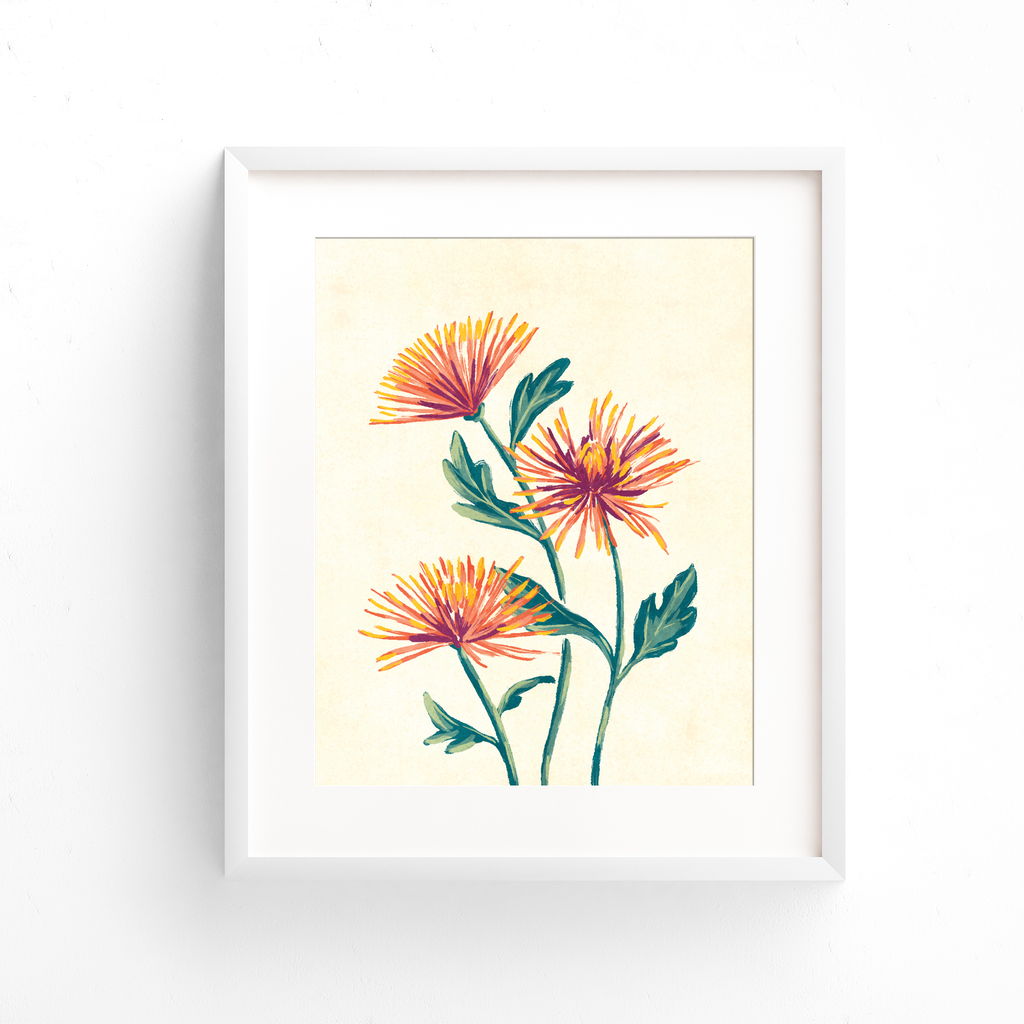 Red spider mum fine art print in a white frame
