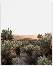 Load image into Gallery viewer, CHOLLA CACTUS
