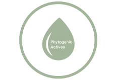 Phytogenic Actives