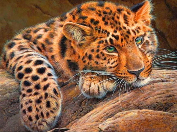 Leopard Diy Paint By Numbers Kits PBN52901