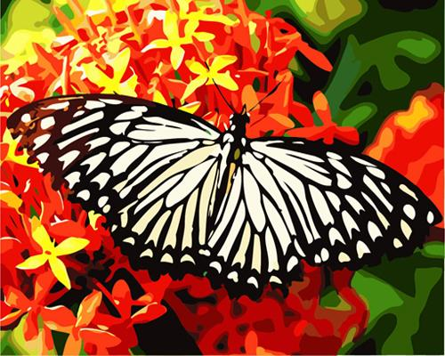 Flying Animal Butterfly Diy Paint By Numbers Kits ZXB490
