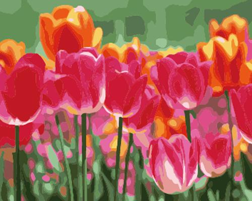 Tulips Diy Paint By Numbers Kits ZXB746