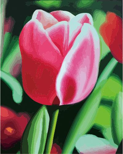 Tulips Diy Paint By Numbers Kits ZXE278
