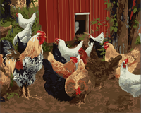 Farm Animal Cocks Diy Paint By Numbers Kits ZXE527