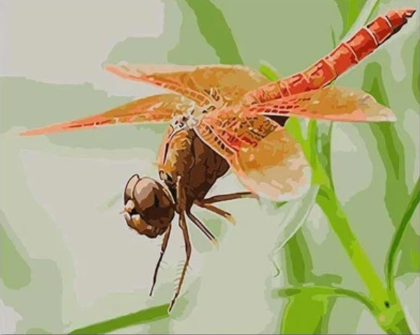 Dragonfly  Diy Paint By Numbers Kits PBN30239