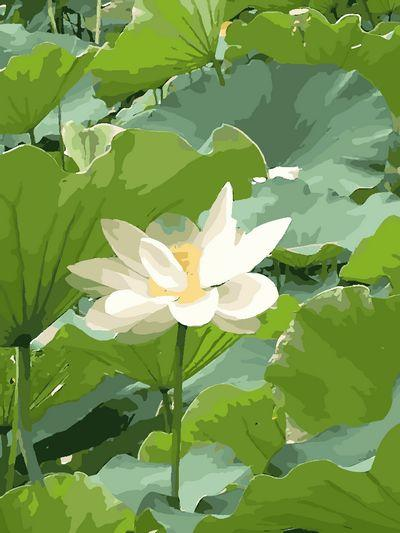 Lotus Diy Paint By Numbers Kits ZXQ055